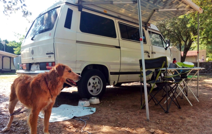 Pets allowed in the camping