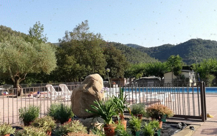Foto plantes piscina